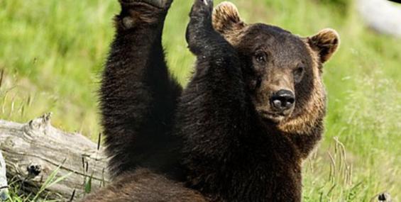 Медведь пришёл