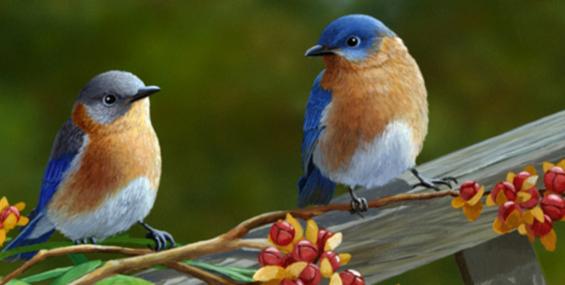 1 апреля - Международный день птиц