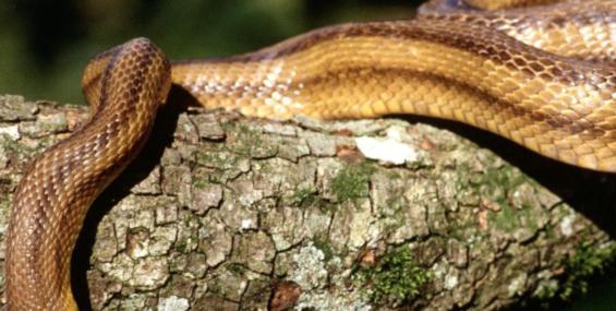 22 июня - День Скипера-Змея (Змеиный день)